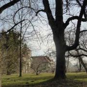 Der Botanische Garten München