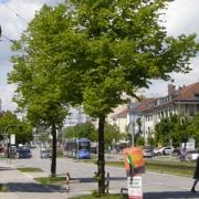 Stadtbäume in München