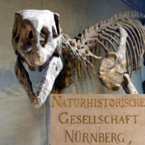 Naturhistorische Gesellschaft Nürnberg