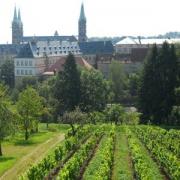 Weinberg Michaelsberg Bamberg